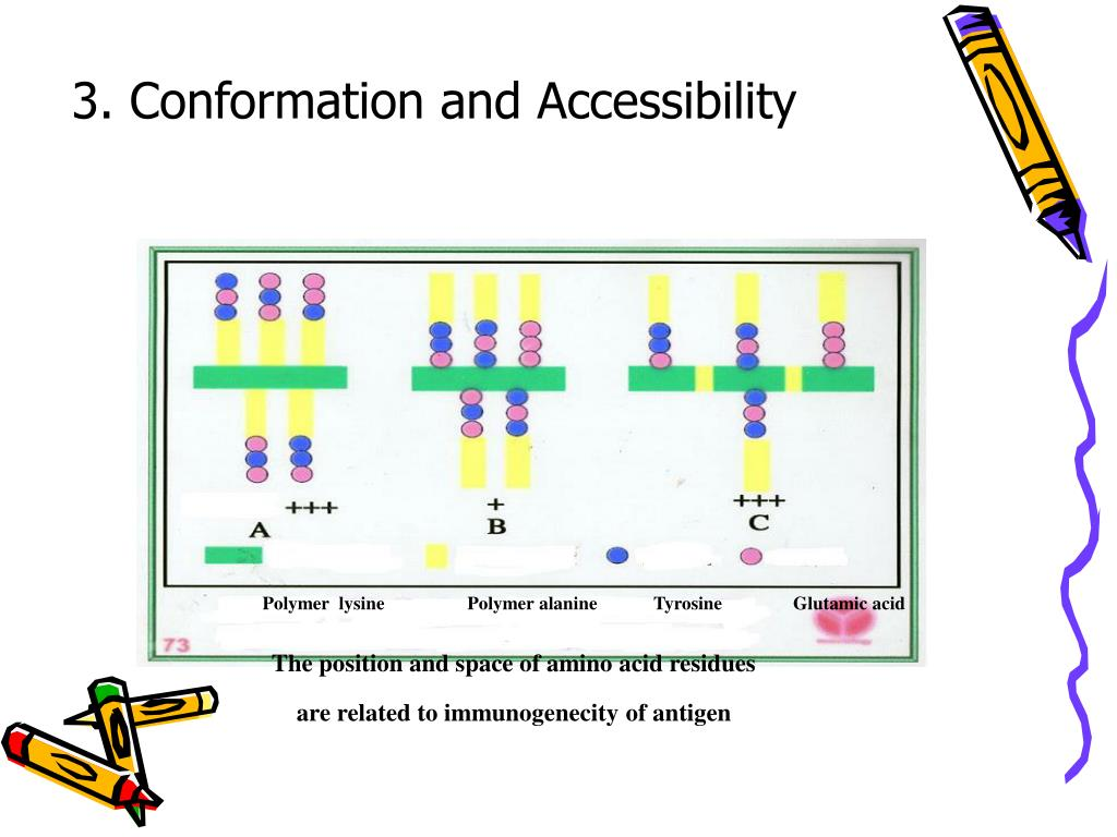 3. Conformation and Accessibility