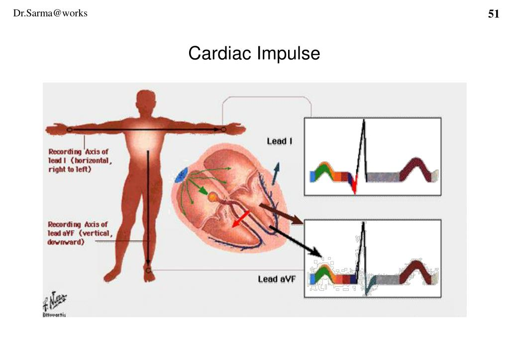Cardiac Impulse