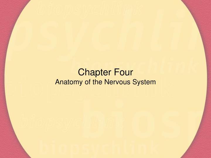Chapter four anatomy of the nervous system l.jpg