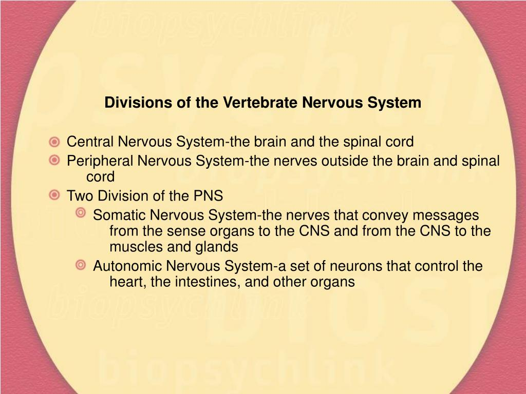 Divisions of the Vertebrate Nervous System
