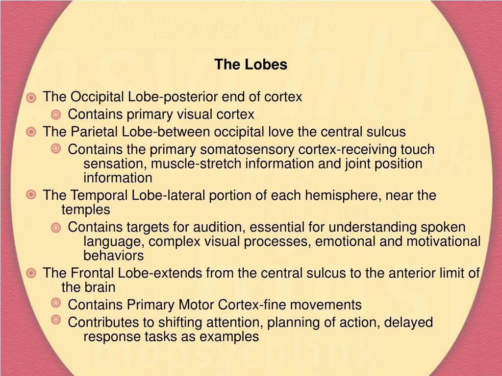 The Lobes