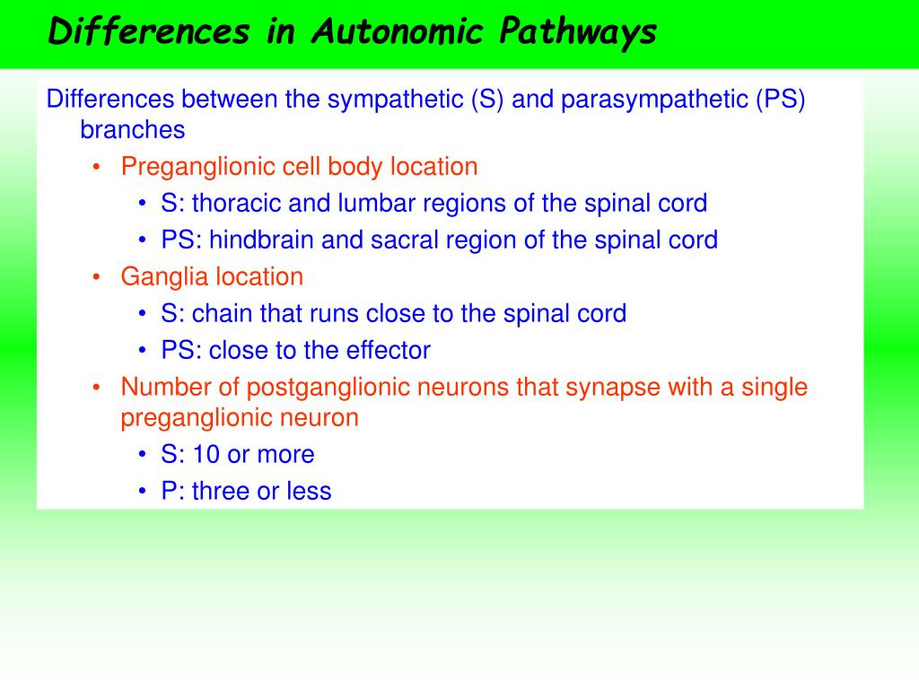 Differences in Autonomic Pathways
