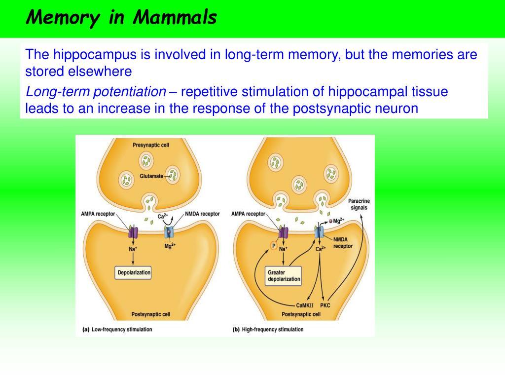 Memory in Mammals