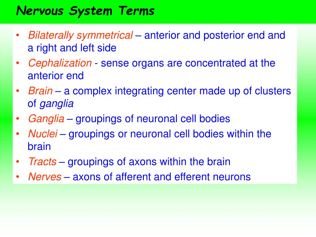 Nervous System Terms