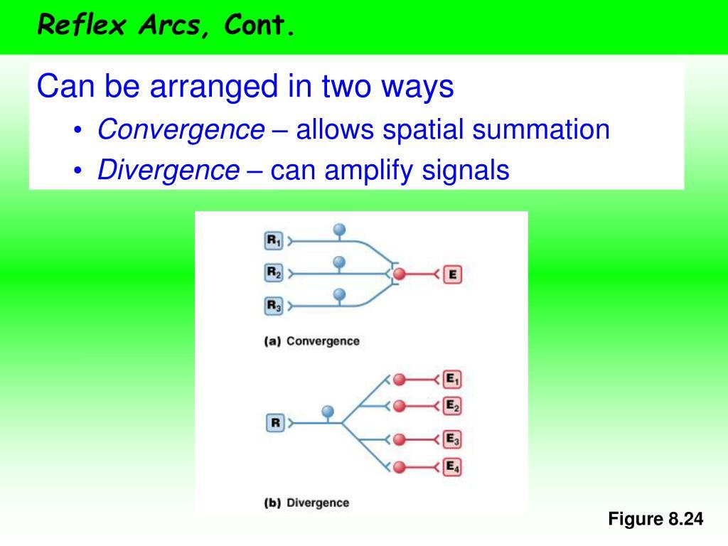 Reflex Arcs,