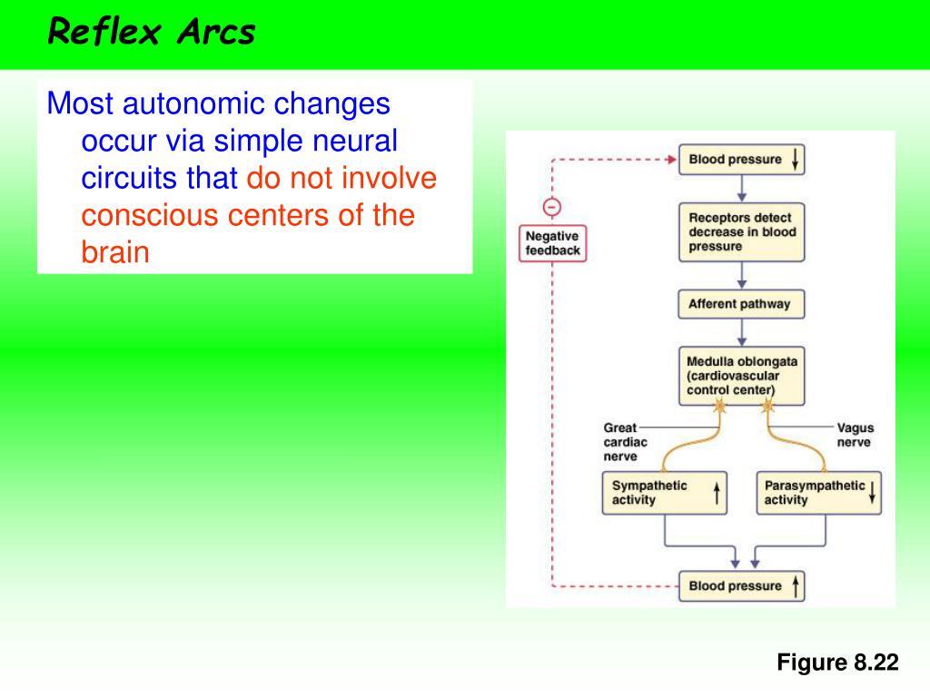 Reflex Arcs
