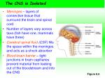 the cns is isolated