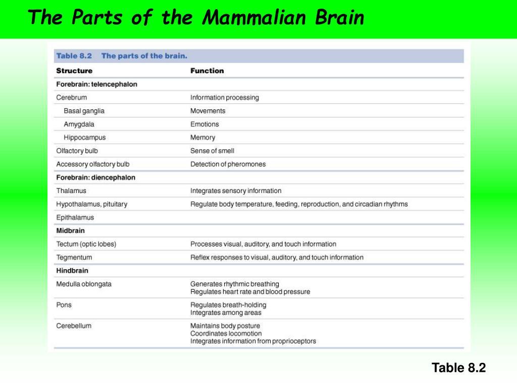 The Parts of the Mammalian Brain