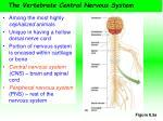 the vertebrate central nervous system