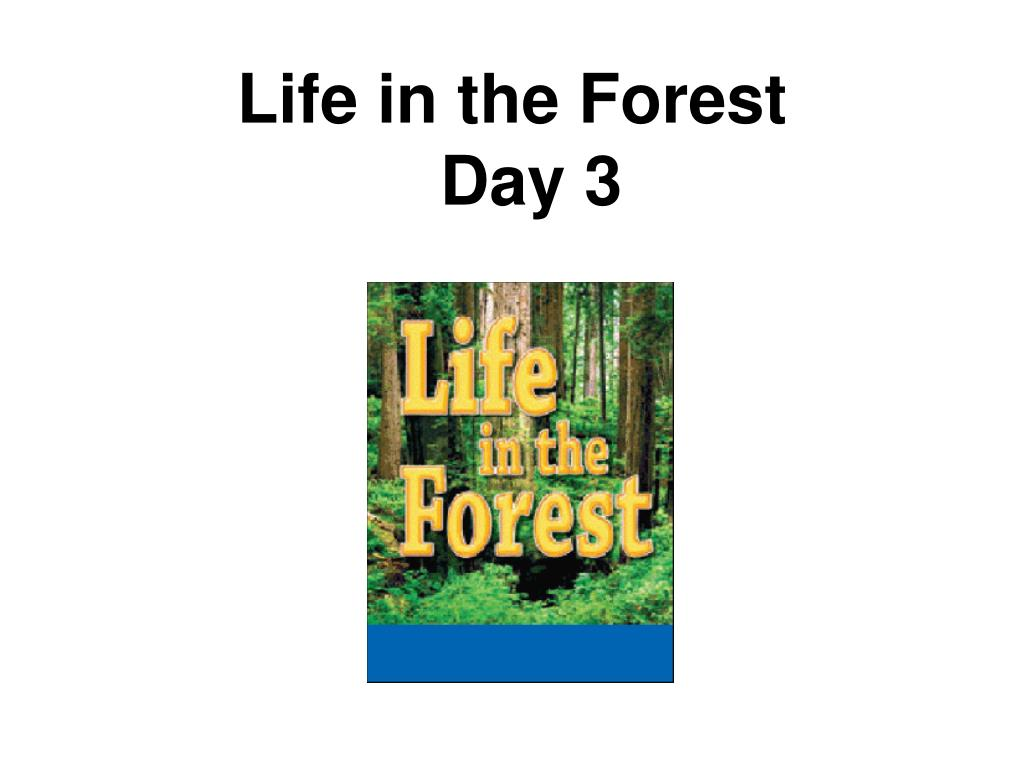 Life in the Forest