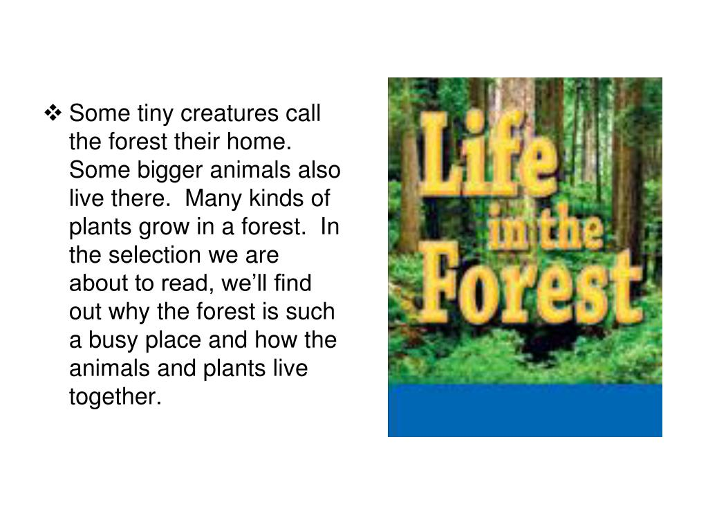 Some tiny creatures call the forest their home.  Some bigger animals also live there.  Many kinds of plants grow in a forest.  In the selection we are about to read, we'll find out why the forest is such a busy place and how the animals and plants live together.