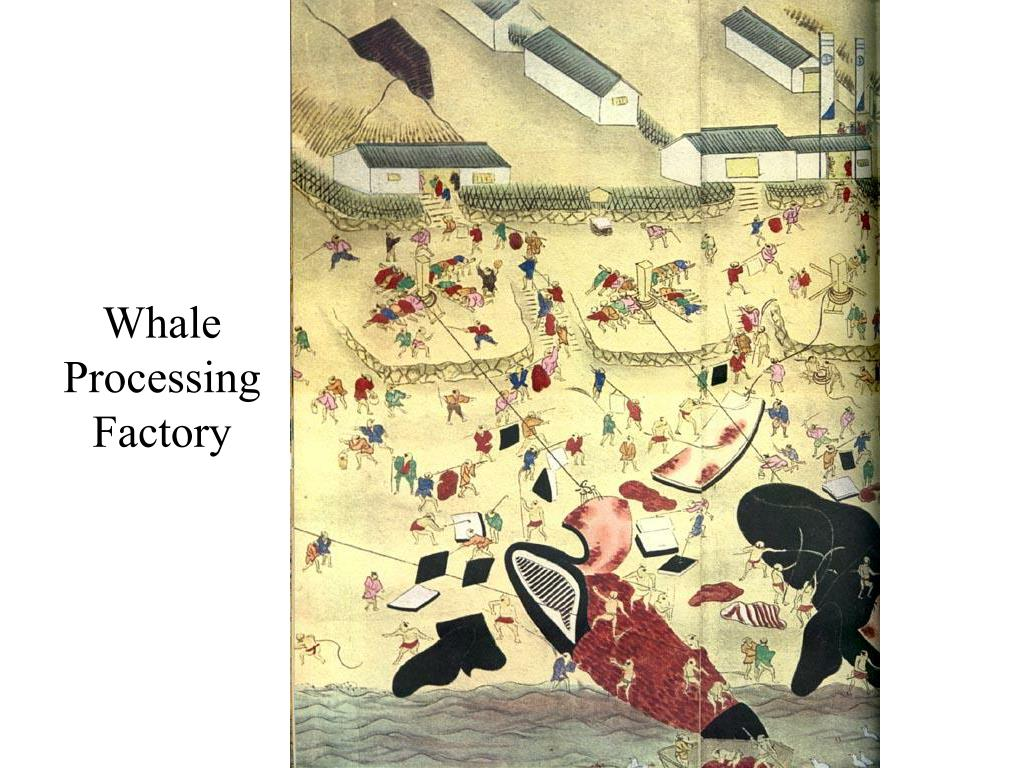 Whale Processing Factory