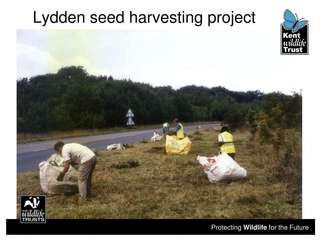Lydden seed harvesting project