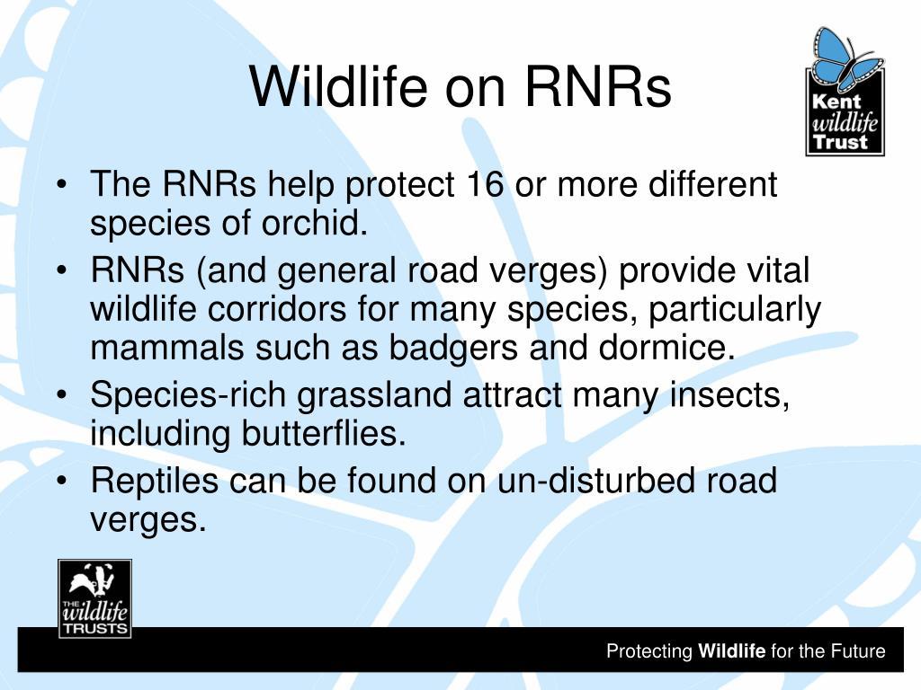 Wildlife on RNRs