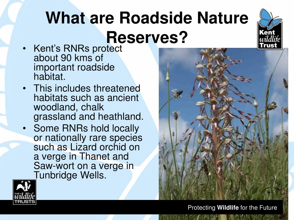 What are Roadside Nature Reserves?