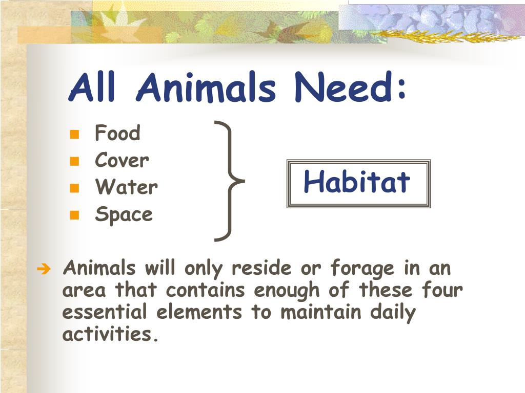 All Animals Need:
