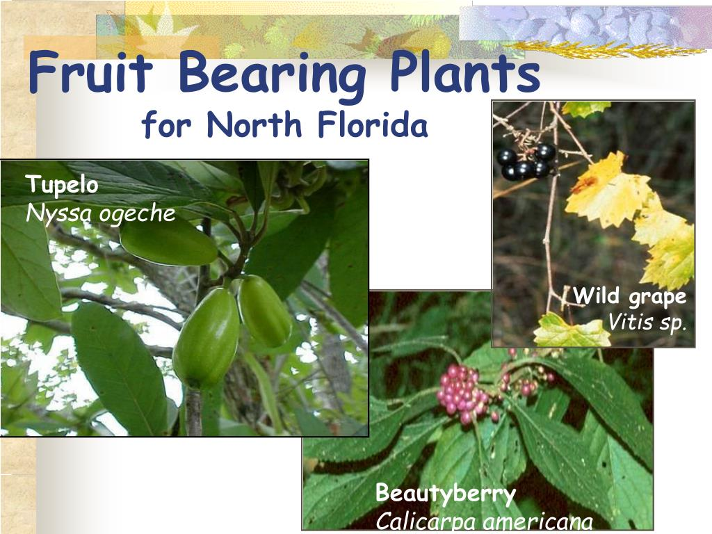Fruit Bearing Plants