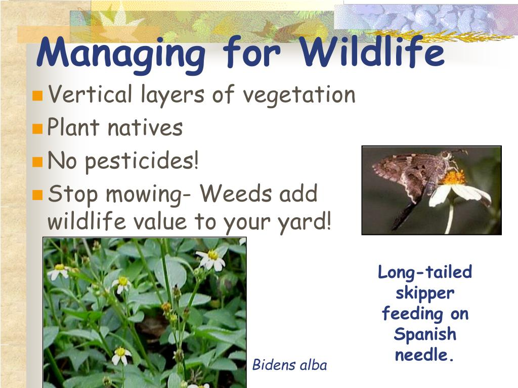 Managing for Wildlife