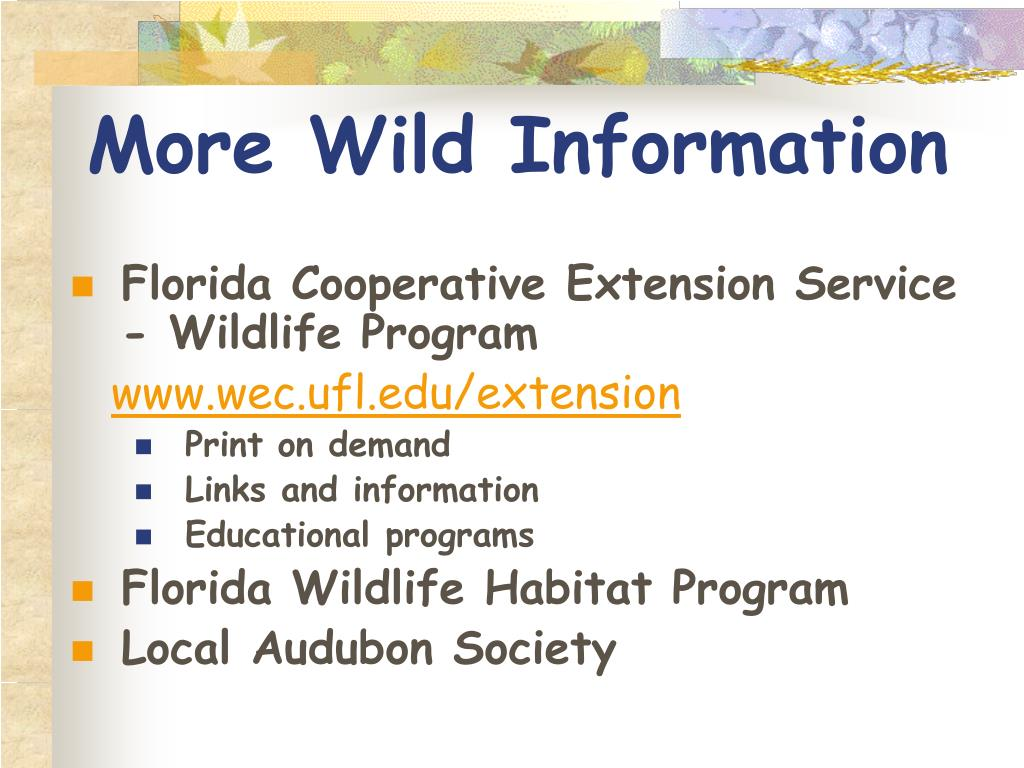 More Wild Information