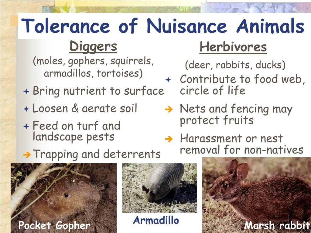 Tolerance of Nuisance Animals