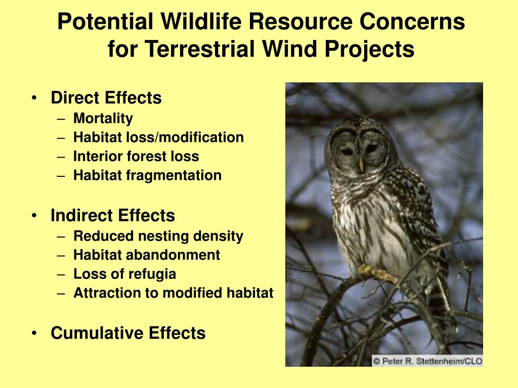 Potential Wildlife Resource Concerns