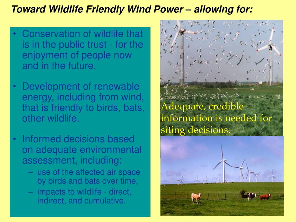 Toward Wildlife Friendly Wind Power – allowing for:
