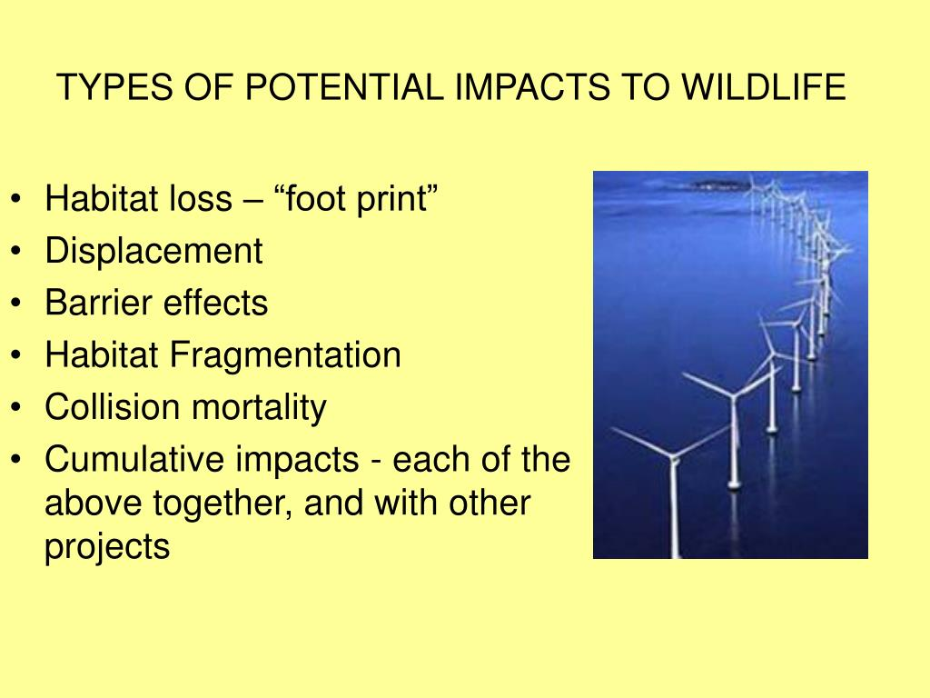 TYPES OF POTENTIAL IMPACTS TO WILDLIFE