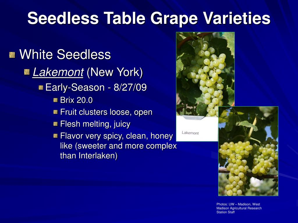Ppt seedless table grapes 2009 update powerpoint presentation id 340558 - Seedless grape cultivars ...