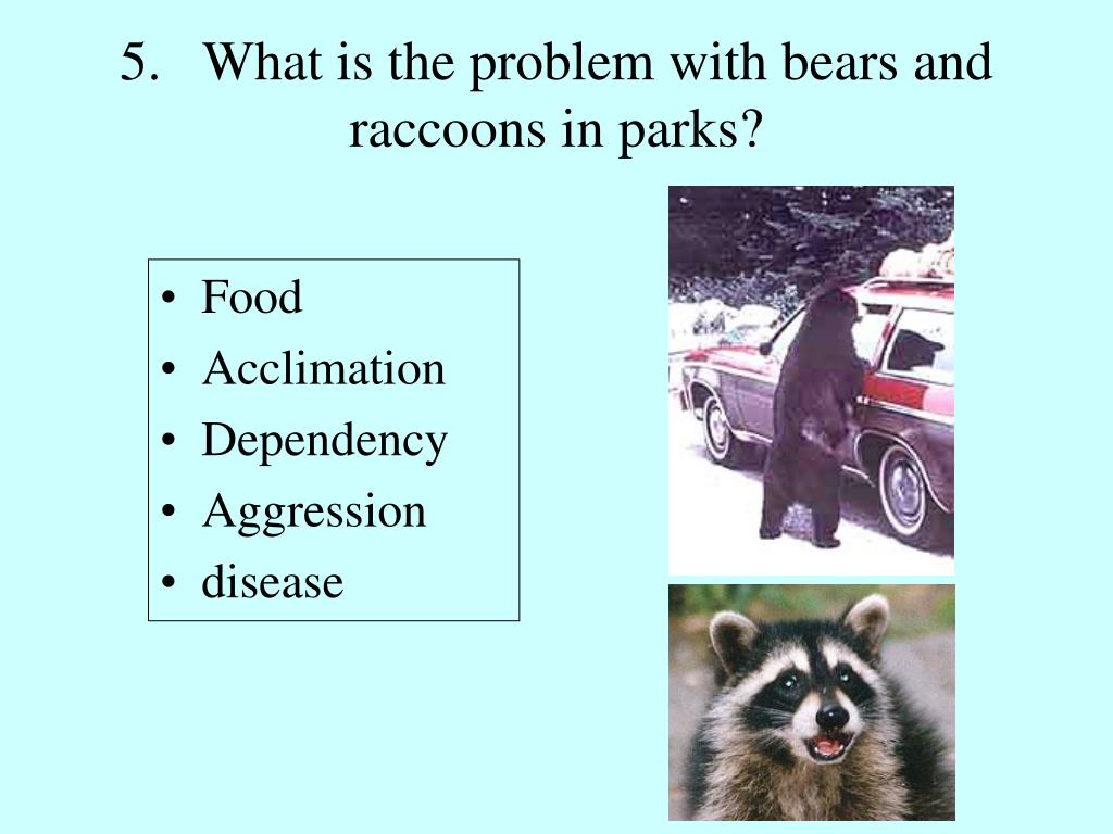5.   What is the problem with bears and raccoons in parks?