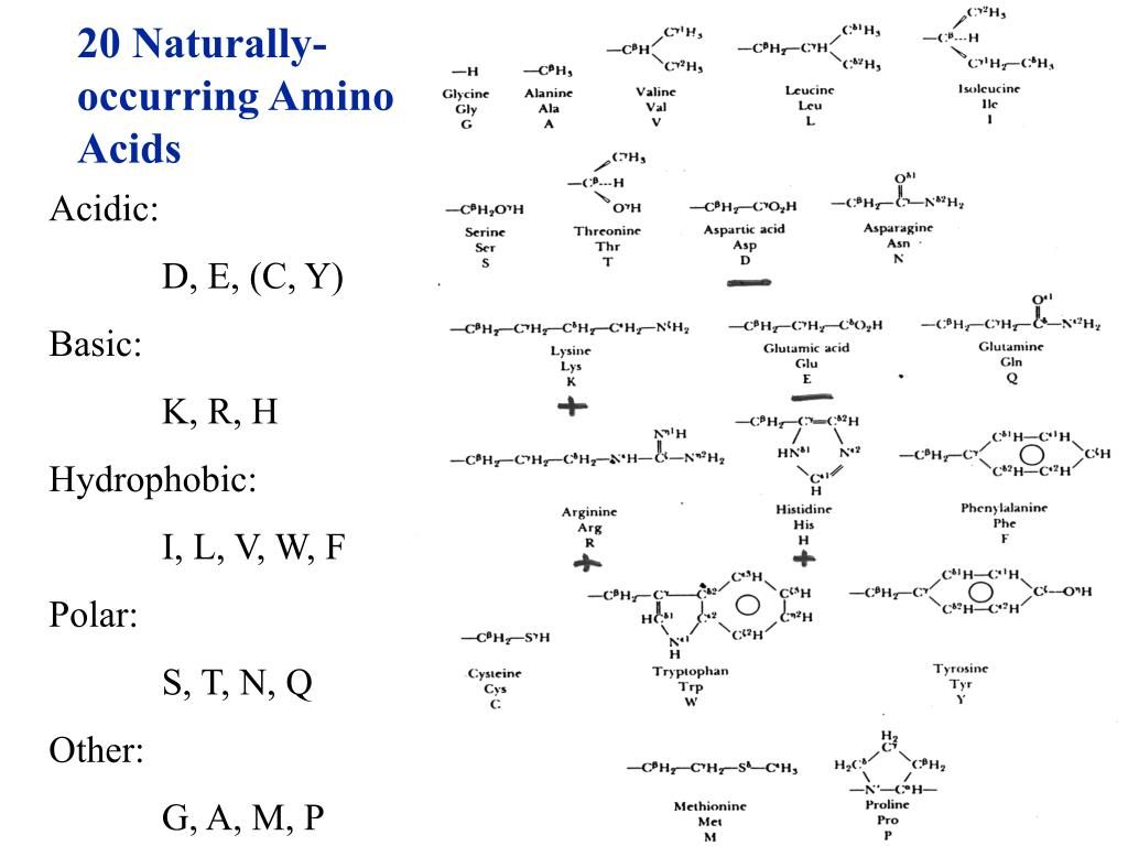 20 Naturally-occurring Amino Acids