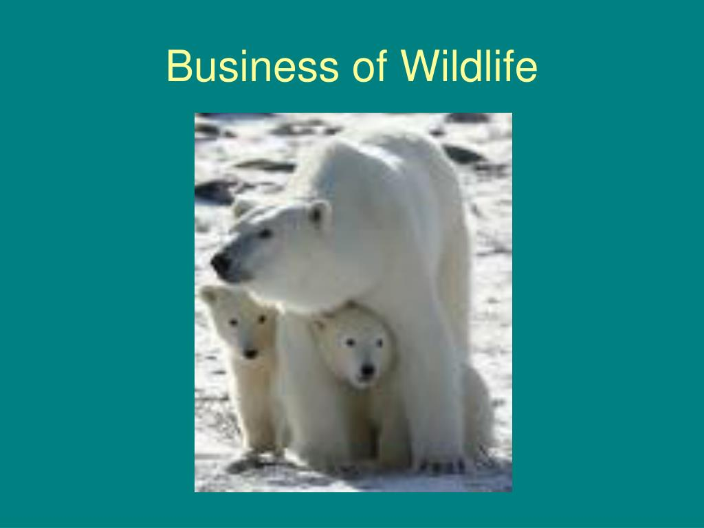 Business of Wildlife