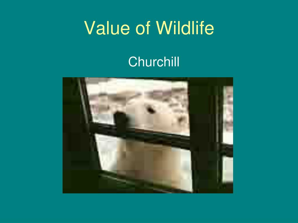 Value of Wildlife