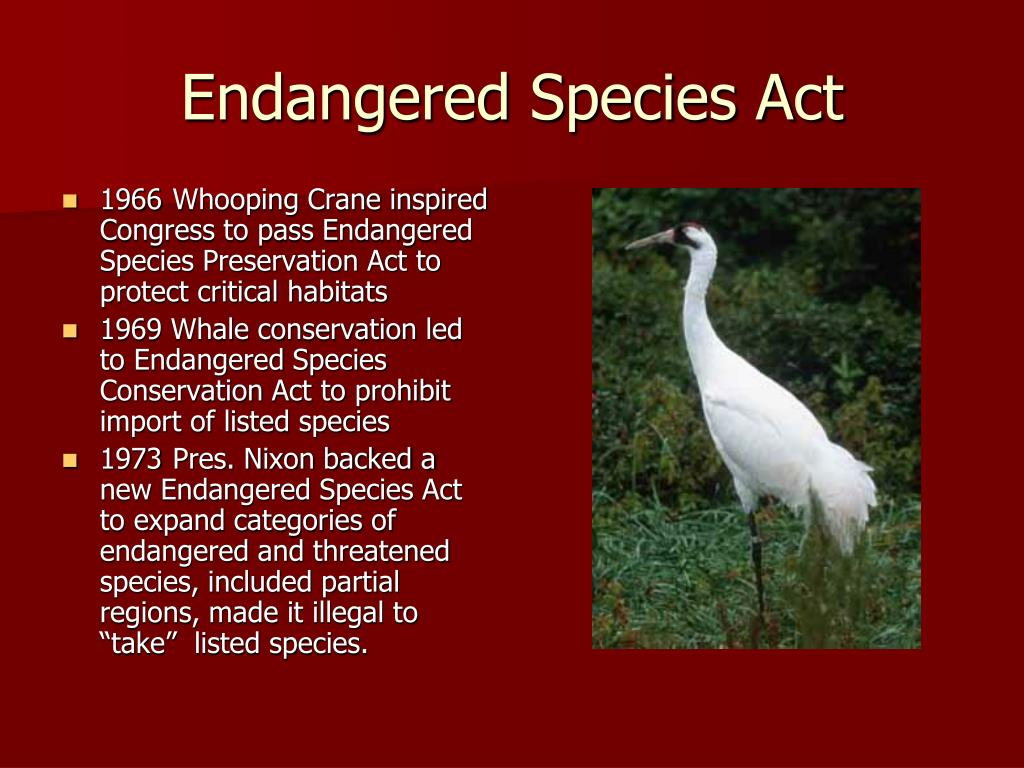 should endangered species be preserved all Religious people should be more concerned about humans than endangered species endangered species have more right not should endangered species be preserved all.
