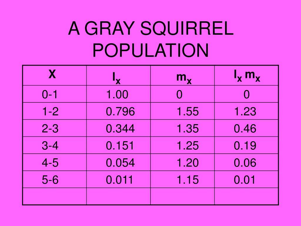A GRAY SQUIRREL POPULATION