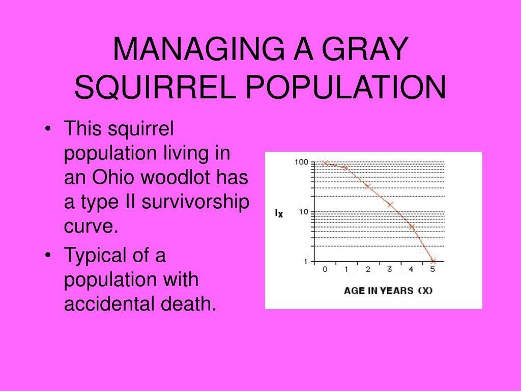 MANAGING A GRAY SQUIRREL POPULATION