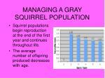 managing a gray squirrel population8