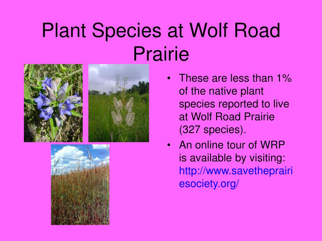 Plant Species at Wolf Road Prairie