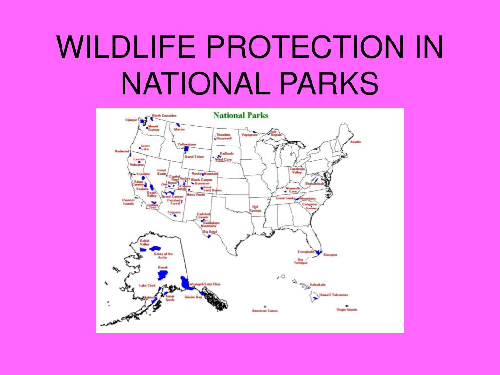 WILDLIFE PROTECTION IN NATIONAL PARKS