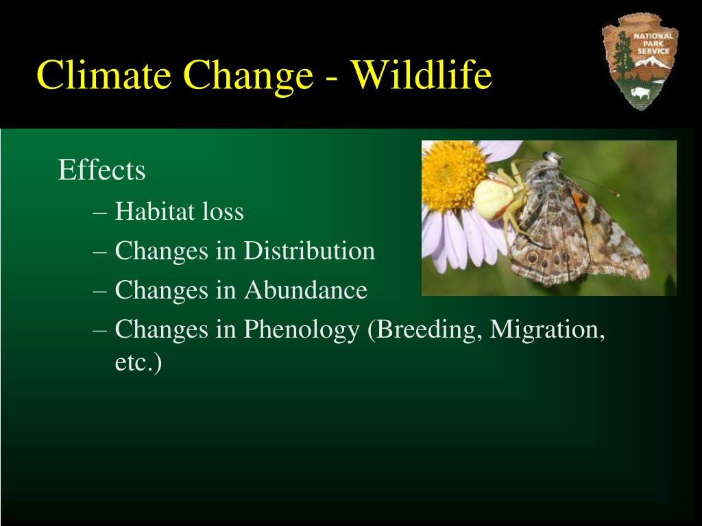 Climate Change - Wildlife