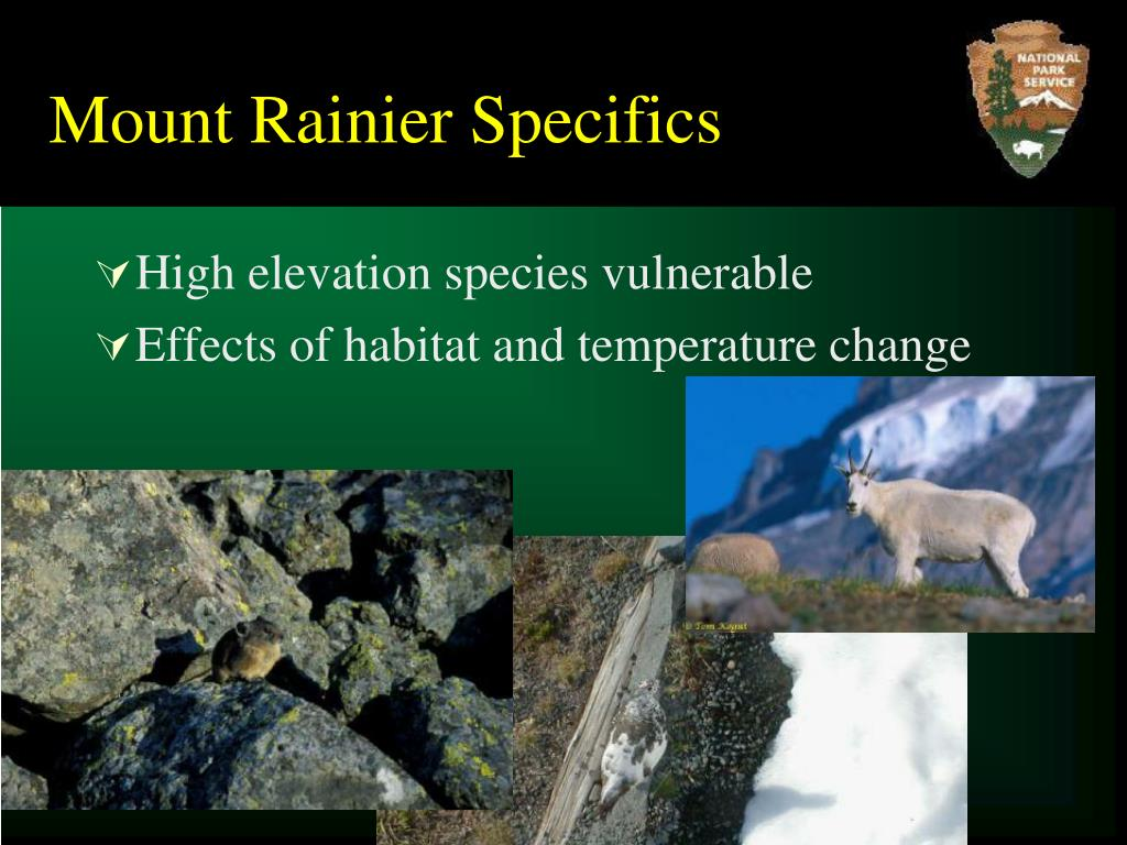 Mount Rainier Specifics