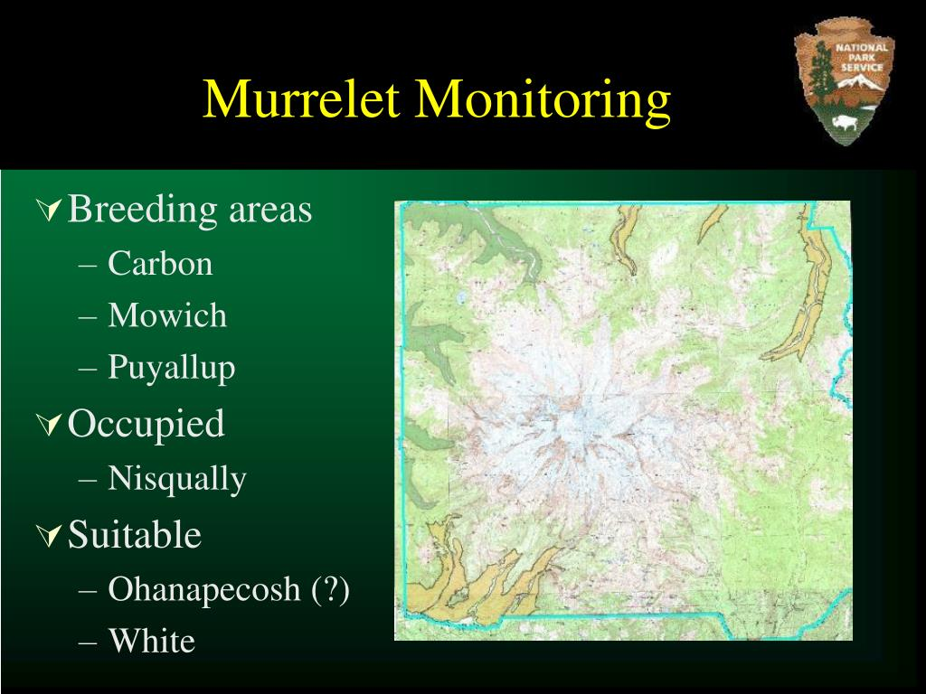 Murrelet Monitoring