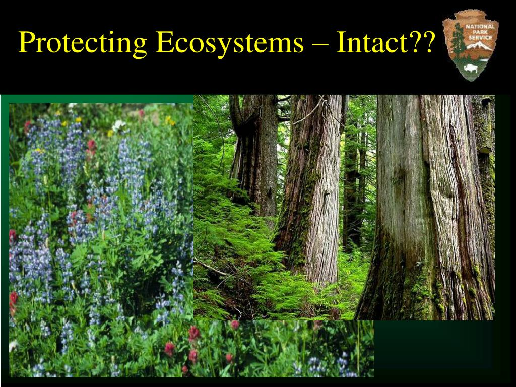 Protecting Ecosystems – Intact??