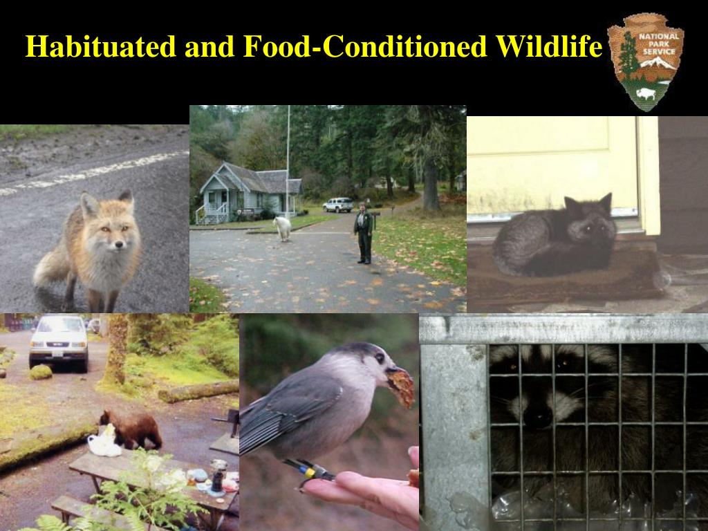 Habituated and Food-Conditioned Wildlife