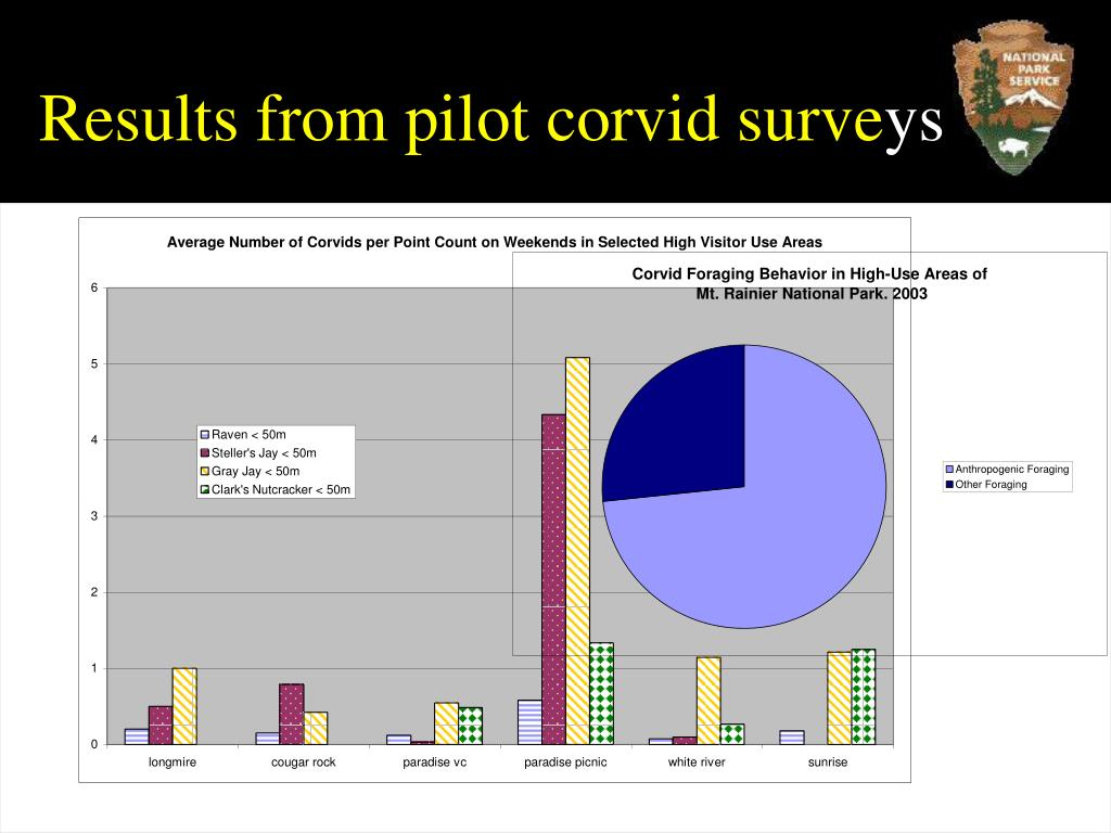 Results from pilot corvid surve