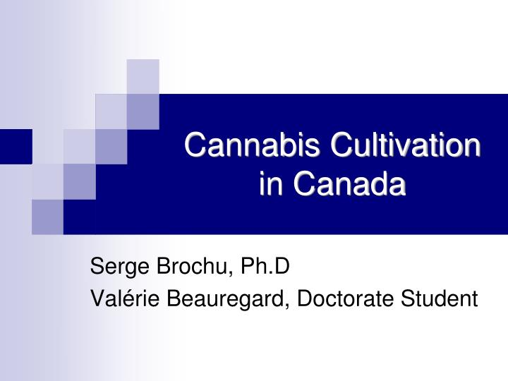 Cannabis cultivation in canada