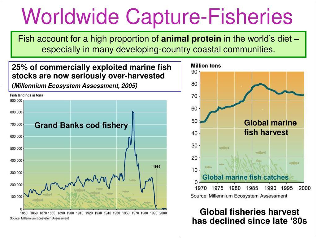 Worldwide Capture-Fisheries