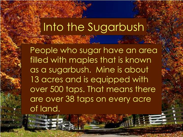 Into the sugarbush l.jpg