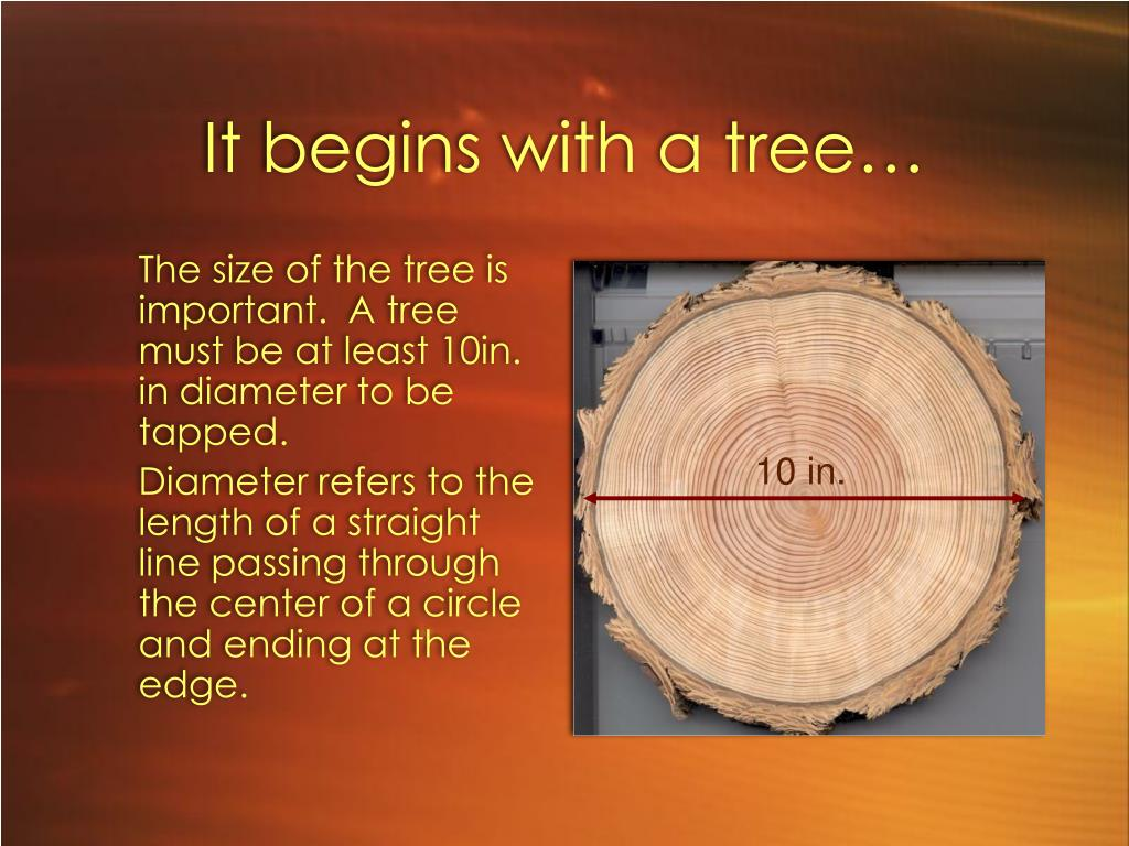 It begins with a tree…