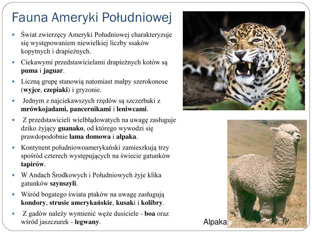 Fauna Ameryki Południowej