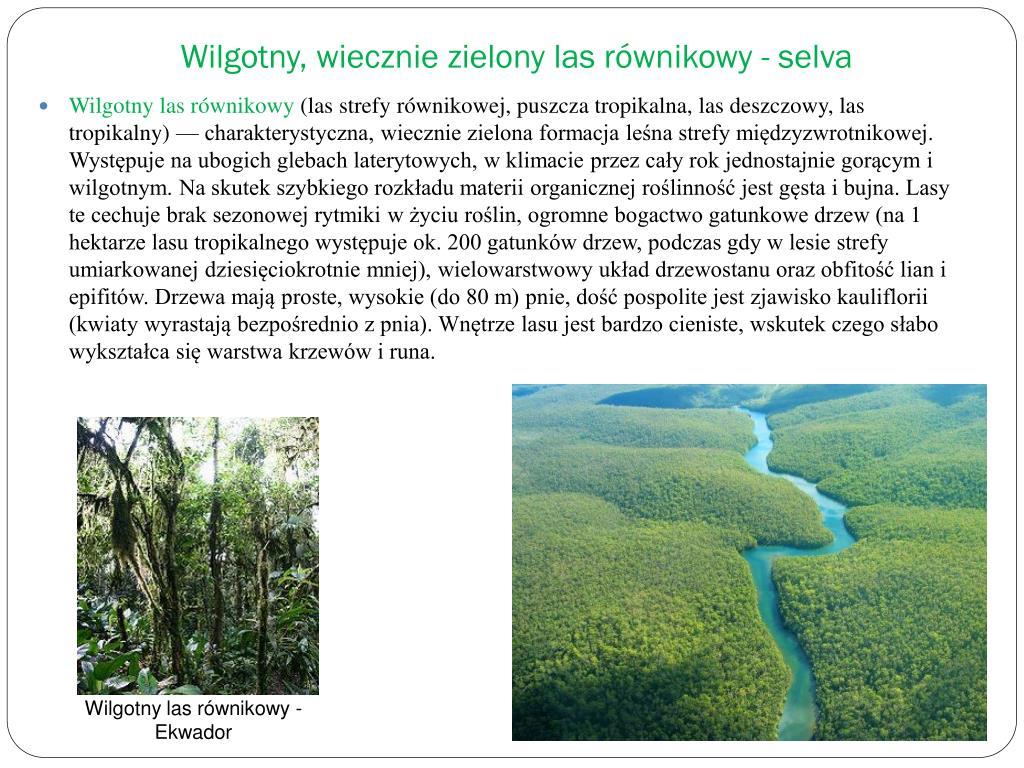 Wilgotny, wiecznie zielony las równikowy - selva